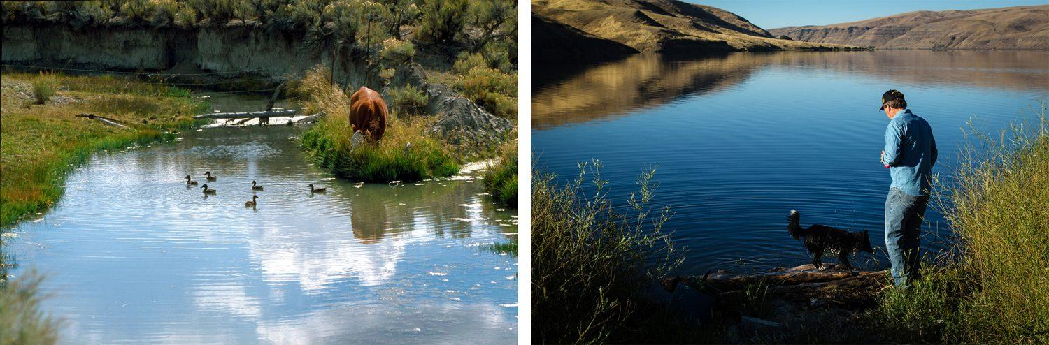 Left: A cow drinks from a river. Right: Farmer Bryan Jones has seen the free-flowing Snake River he knew as a child turn into a series of dams.