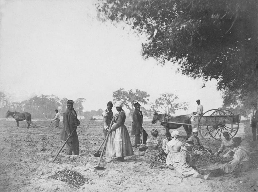 Archival photograph of enslaved workers on a plantation in South Carolina on April 8, 1862.