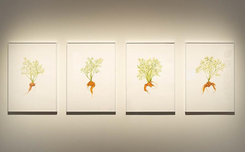 paintings of carrots in grown in twisted forms