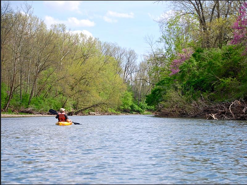A kayaker on the Middle Fork of the Vermilion River in Illinois. They are wearing an orange life jacket. The kayak is yellow. Ripples on the water surface. Green and magenta foliage along the sides of the river.