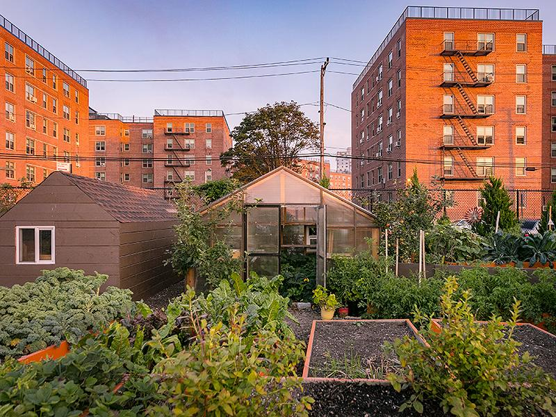 Fruits and vegetables growing in raised beds in a garden. The front side of a greenhouse with a door open. Inside the greenhouse are more plants. Sun is low, shining against the red brick surface of the buildings behind the garden.